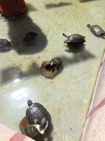 ¡Hasta hay una fuente con tortugas!