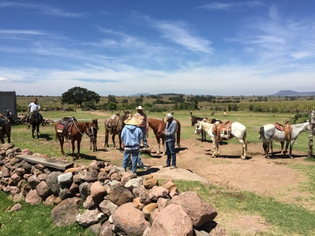 Paseo a caballo y mula