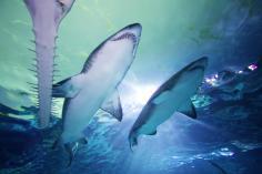 Ripley's Aquarium3