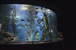 Ripley's Aquarium5