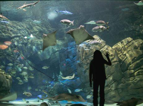 Ripley's Aquarium6