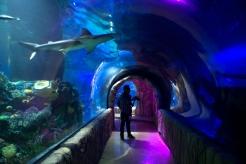 acuario3