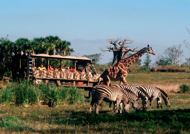 kilimanjaro safaris.jpg
