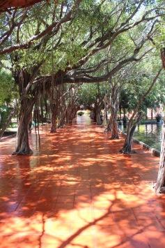 pasillo árboles