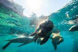 Snorkeling with Sea Lions at espiritu santo 2