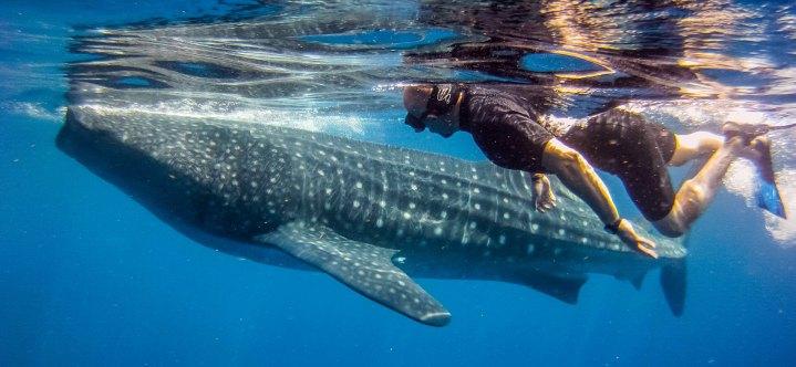 whale-shark-encounter-cover